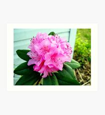 Rhododendron Bush Bloomed Art Print