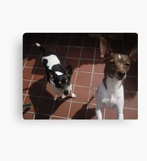 Shing Tao and Gracie Canvas Print