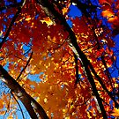 Orange and Blue by C. Michael Cox