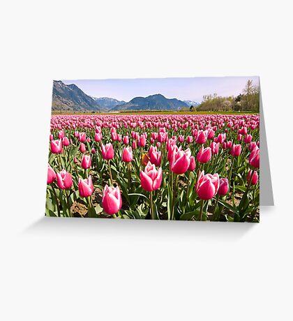 Tulip Farm Greeting Card