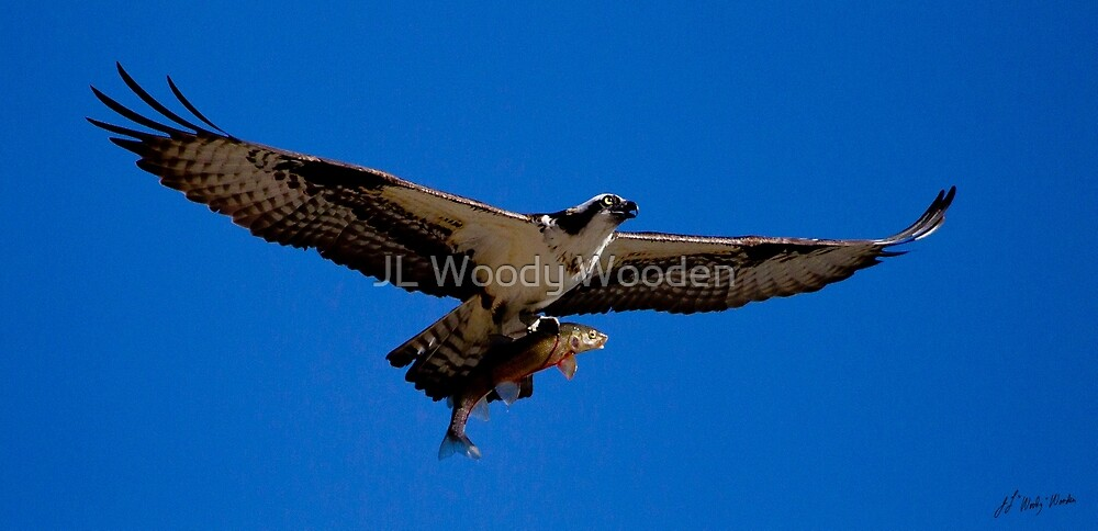 Osprey And Trout   #5070 by JL Woody Wooden