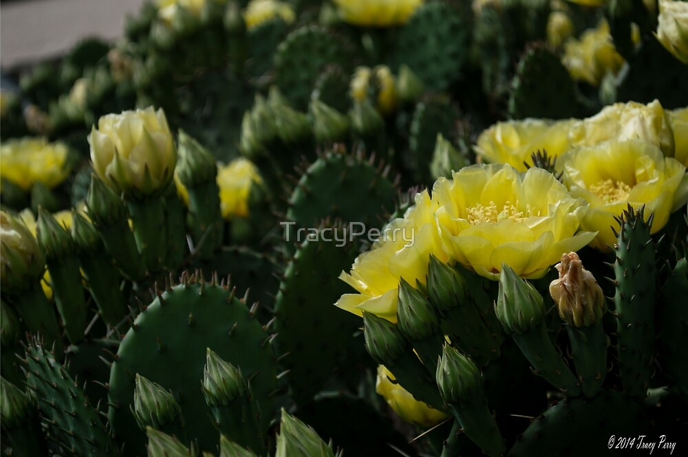 Cactus Plant 3 by TracyPerry