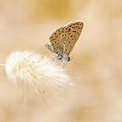 Hippy Chic Common Blue Butterfly - Nature and Wildlife Original photo graphic design Merchandise by VIDDAtees