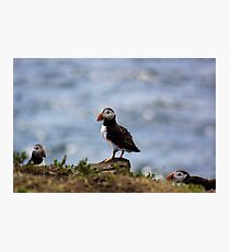 Puffin In The Middle Photographic Print