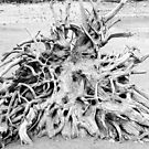 Roots by Steve Hunter