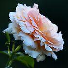 Pastellblumenblätter von imaginethis