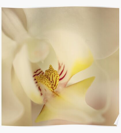 Heart of an orchid Poster