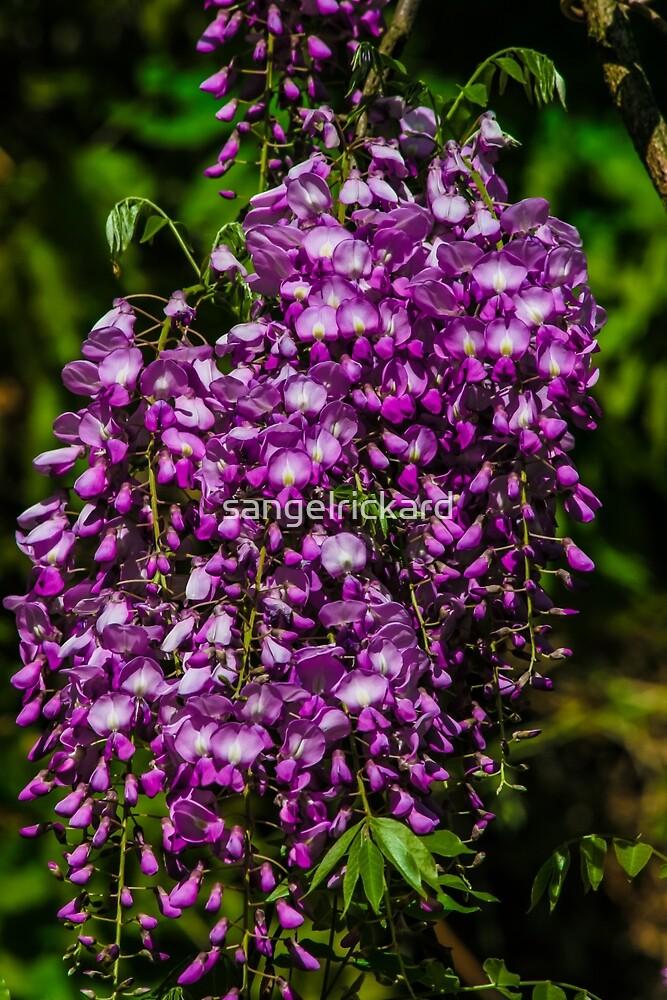 Color Me Purple by sangelrickard