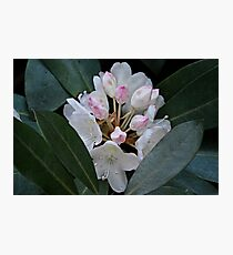 Rhododendron at Gibbs Gardens Photographic Print