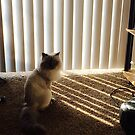 In sunshine or shadow by trisha22
