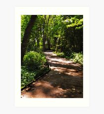 Sheldon Marsh Nature Walk Art Print