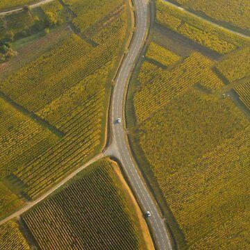 «Route au milieu du vignoble» par Isenmann