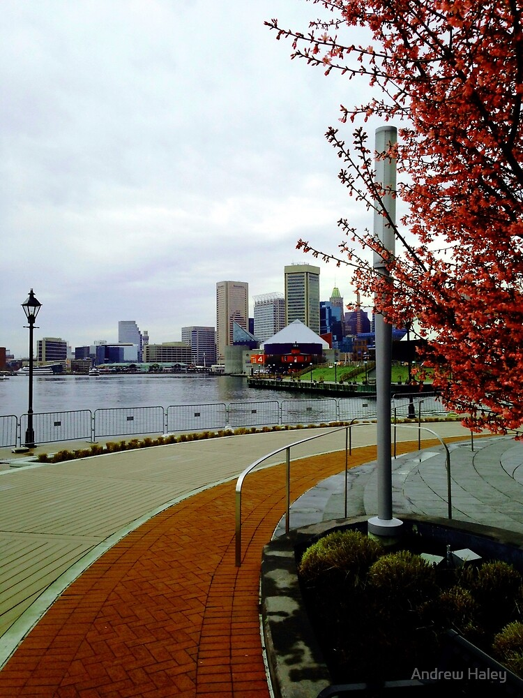 Baltimore Waterfront by Andrew Haley