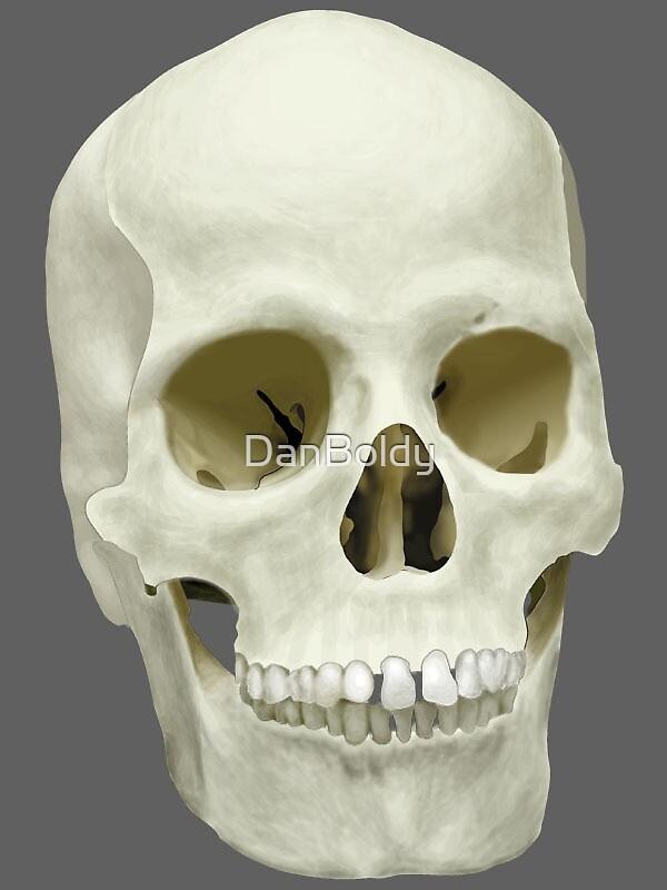 Skull by DanBoldy