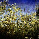 *hedgerow* by funkymarmalade