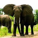 Elephant by Bobby Rognlien