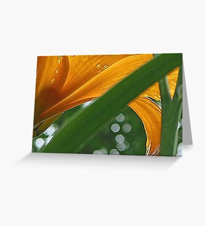 Lily with Raindrops - Bridgton,  Maine Greeting Card