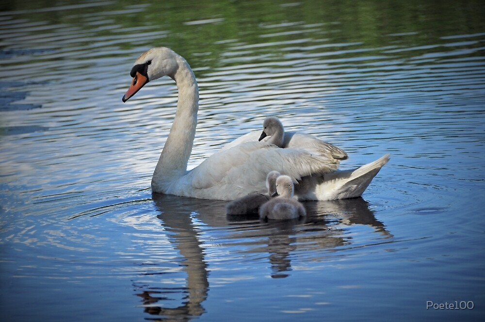 Hitching a ride on mommy... by Poete100