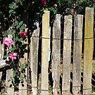 Rambling Rose- Hill End by Sarah Donoghue