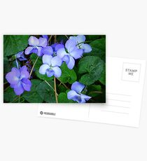 """""""Pine Needles And Wild Violets"""" Postcards"""