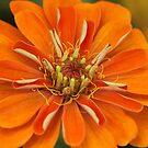 Orange Orange Orange by Deborah  Benoit