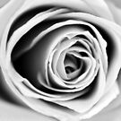 Black and White Rose Triptych III by Kathie Nichols