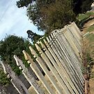 White Picket Fence- Hill End by Sarah Donoghue
