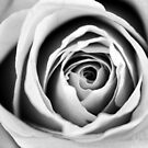 Black and White Rose Triptych II by Kathie Nichols