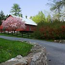 Country Road Take Me Home by Lori Deiter