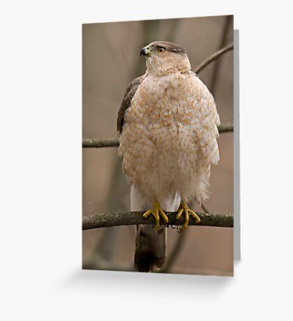 Cooper's Hawk Greeting Card