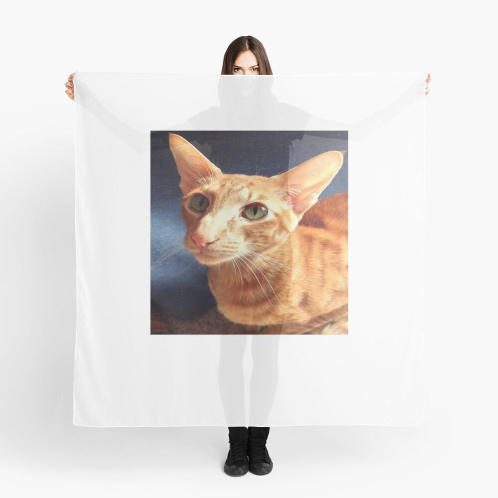 Oriental Cat Scarf