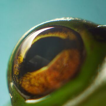 2Frogs eyeball  by MickThow