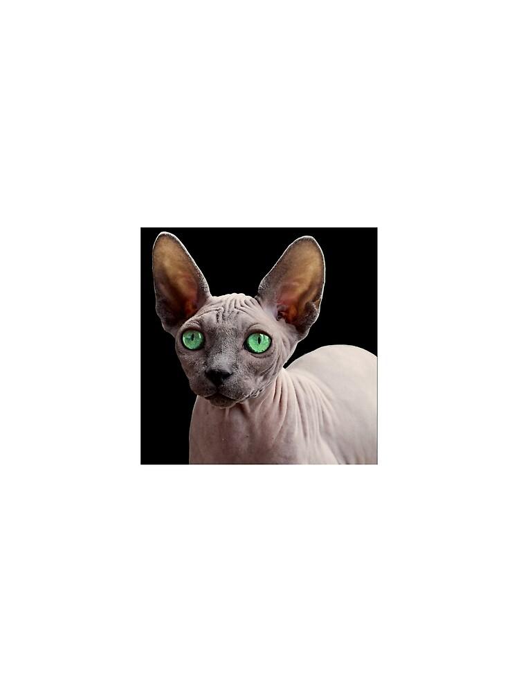Sphynx Cat by Fjfichman