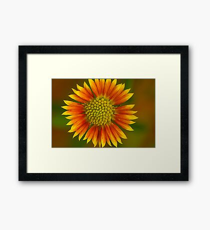 Spreading Happiness Framed Print