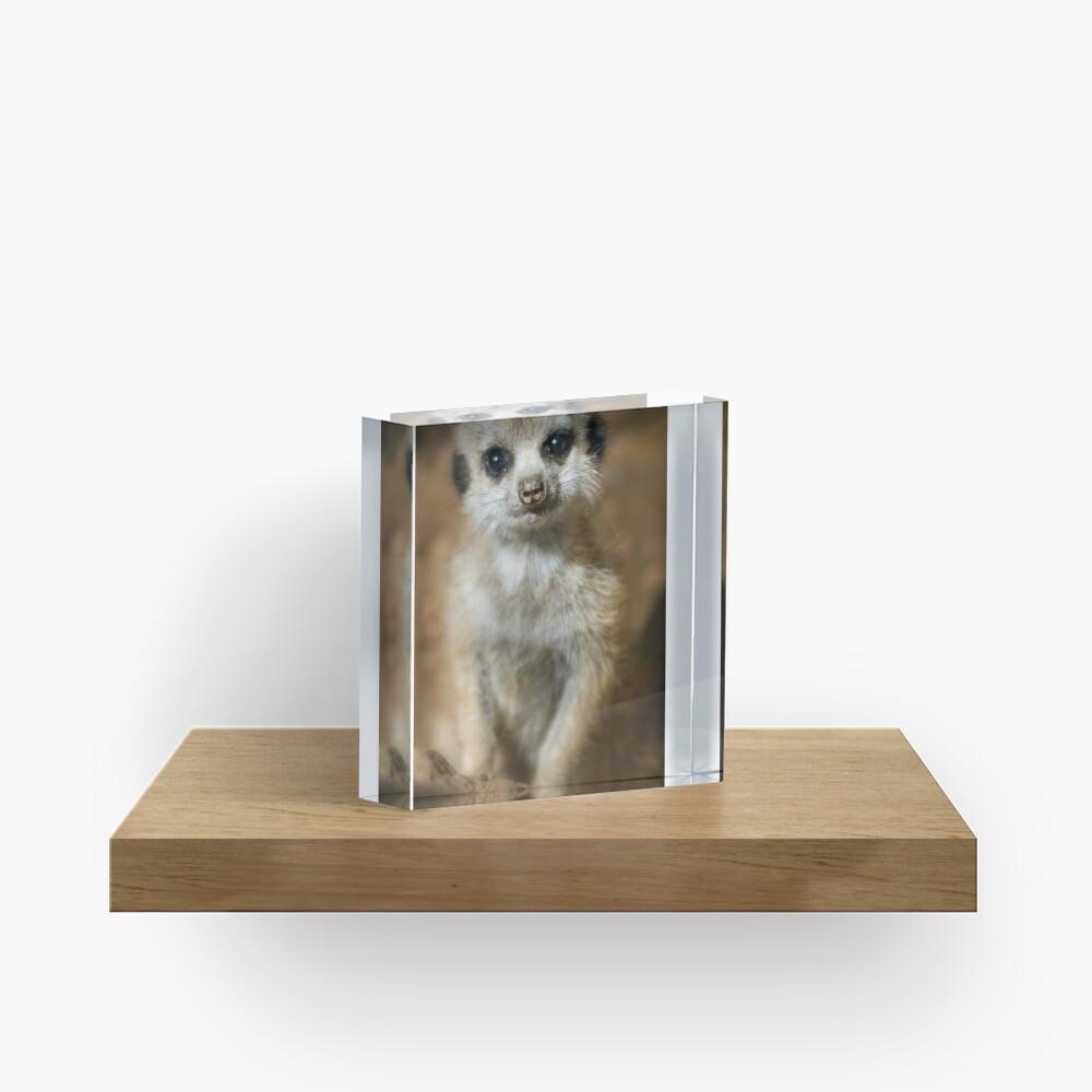 Meerkat Acrylic Block
