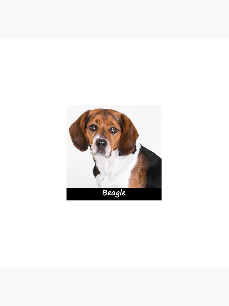 Beagle by Fjfichman