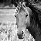 The Brumby - Norseman, WA by Melissa Drummond