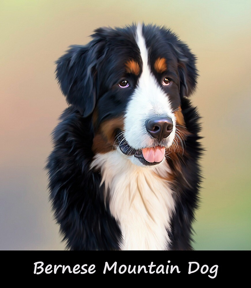 Bernese Mountain Dog by Fjfichman