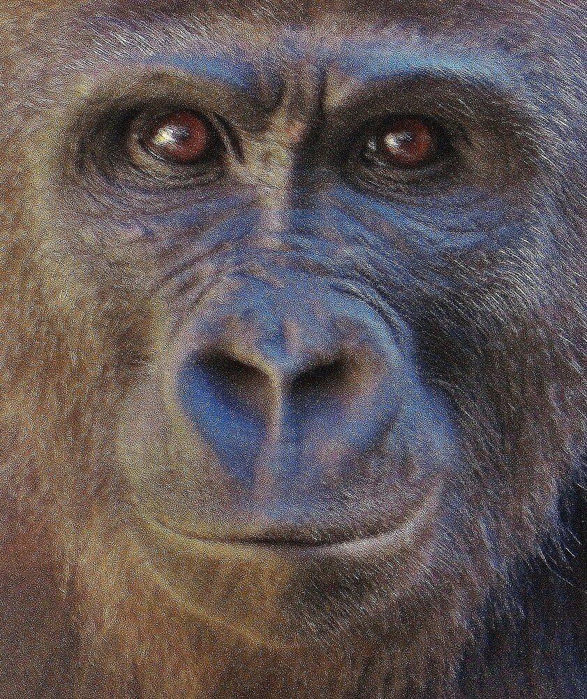 Bonobo by Fjfichman