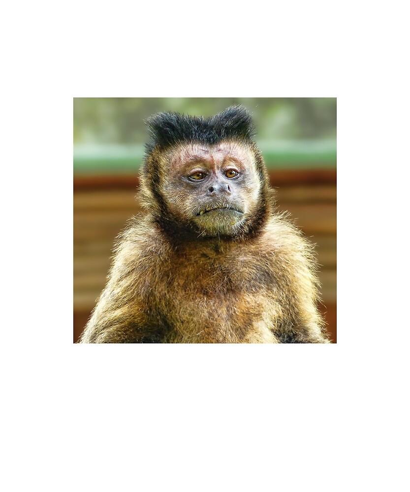 Capuchin Monkey by Fjfichman