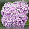 "Mullti Bloom Flower Challenge for ""GORGEOUS FLOWER CARDS"""
