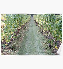 Amongst The Vines Poster