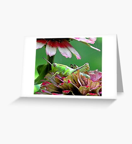 Comfortable .. And, With a View -- Bridgton,  Maine Greeting Card