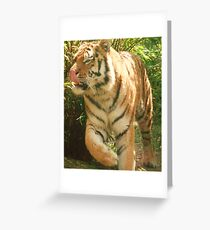 Tiger Licking His Lips !!!  at Colchester Zoo Greeting Card
