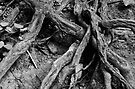 Wicked Roots by Paul Berry
