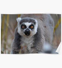 Hey Lemur! Poster