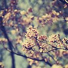 Spring Blossoms by Sid Black