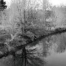 Winter Reflections by MandaP