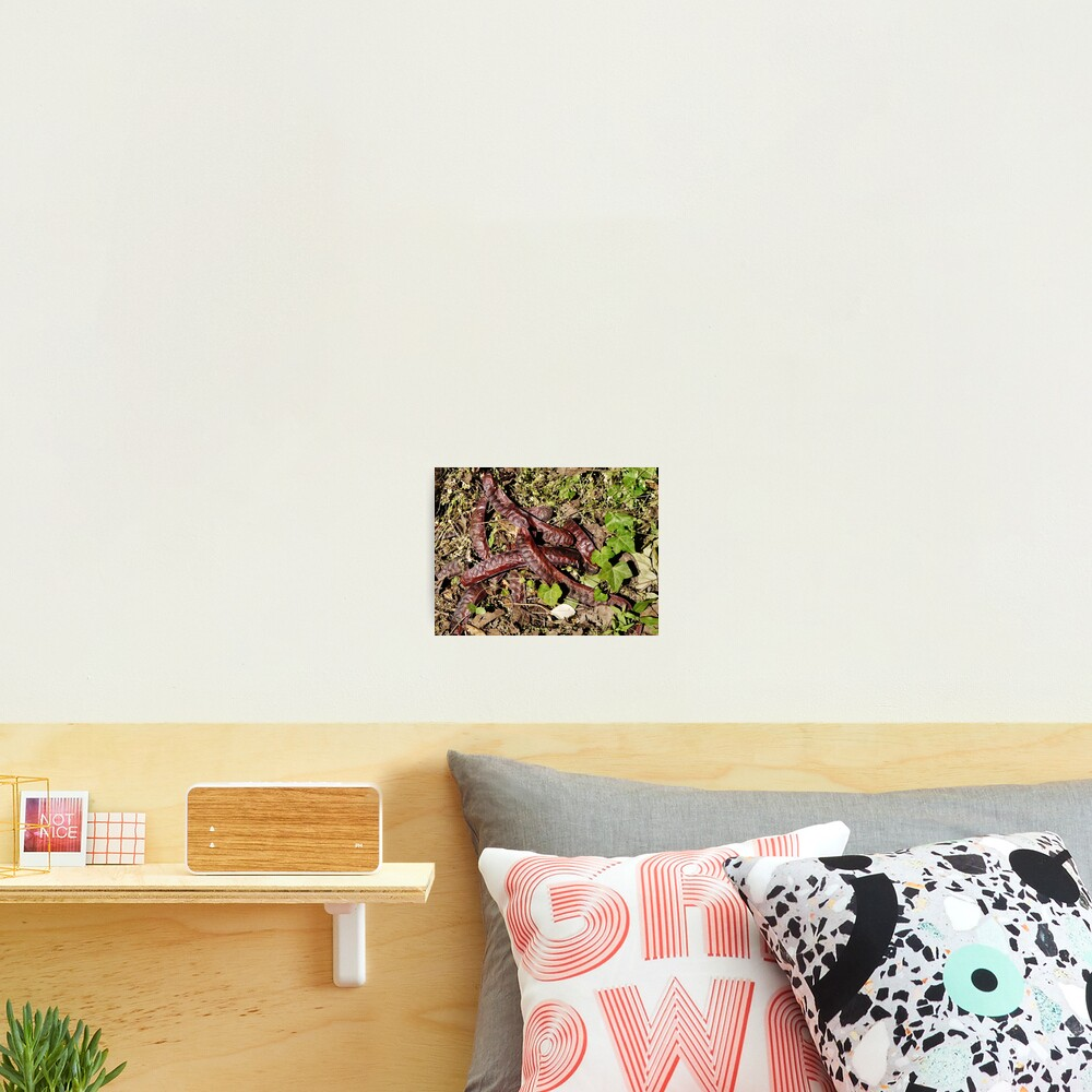 Seed pods Photographic Print