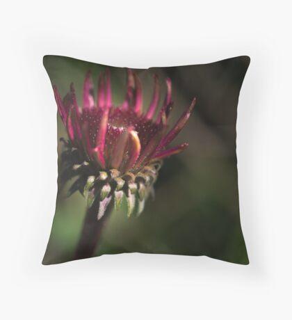 Echinacea Daybreak Throw Pillow